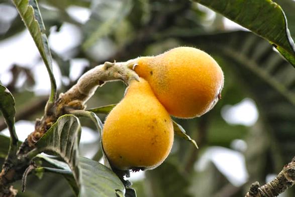 fruit_de_la_reunion_bibasse_1315_DxO